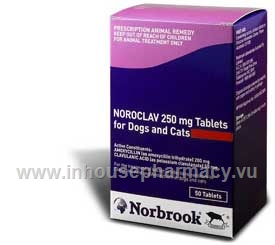 Noroclav 250mg 50 Tablets/Pack